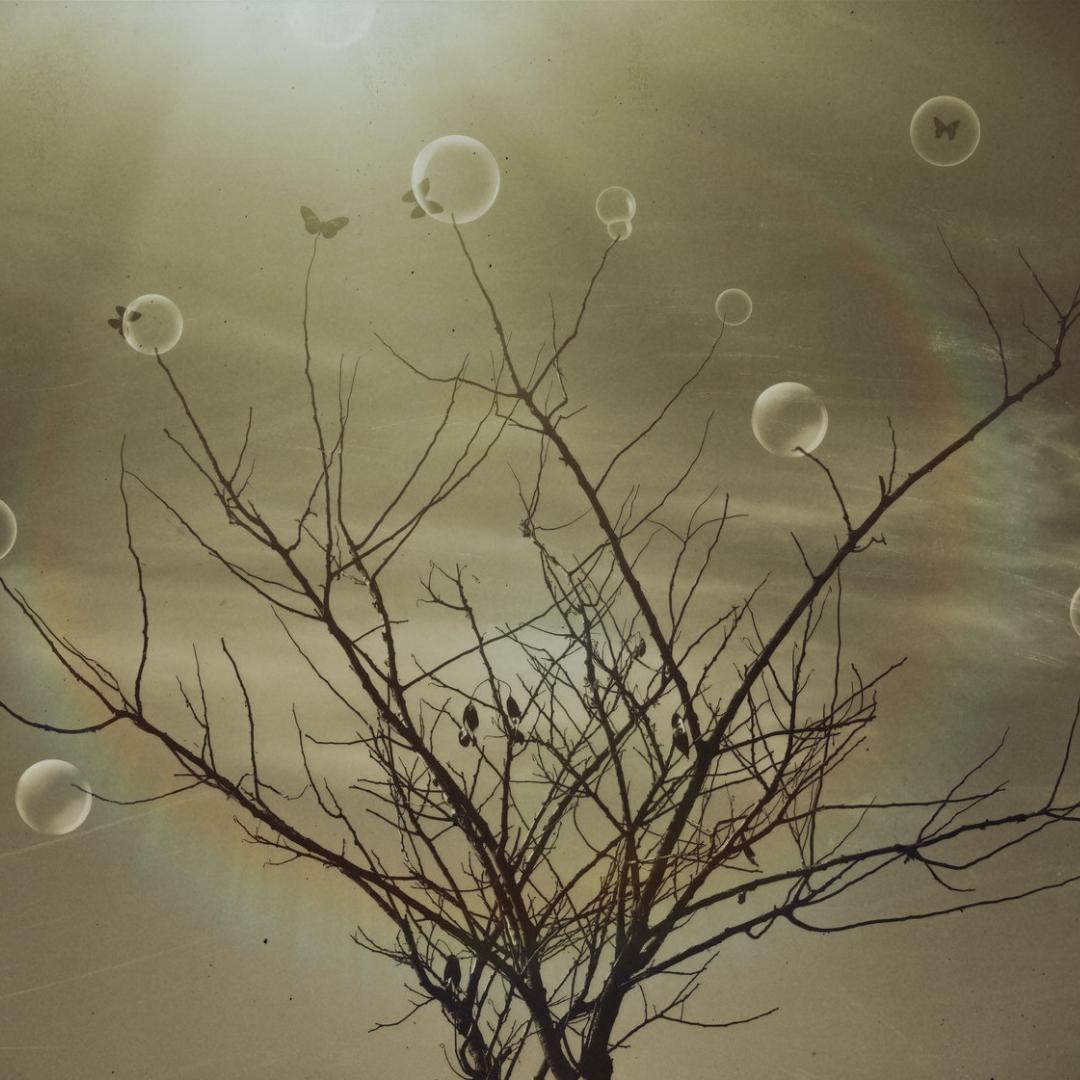 Diuber Sicilia Camacho - tree of dreams